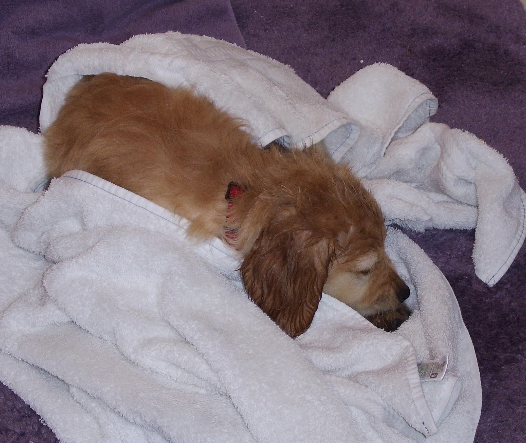Bath Time - Joy's Pics of Pup