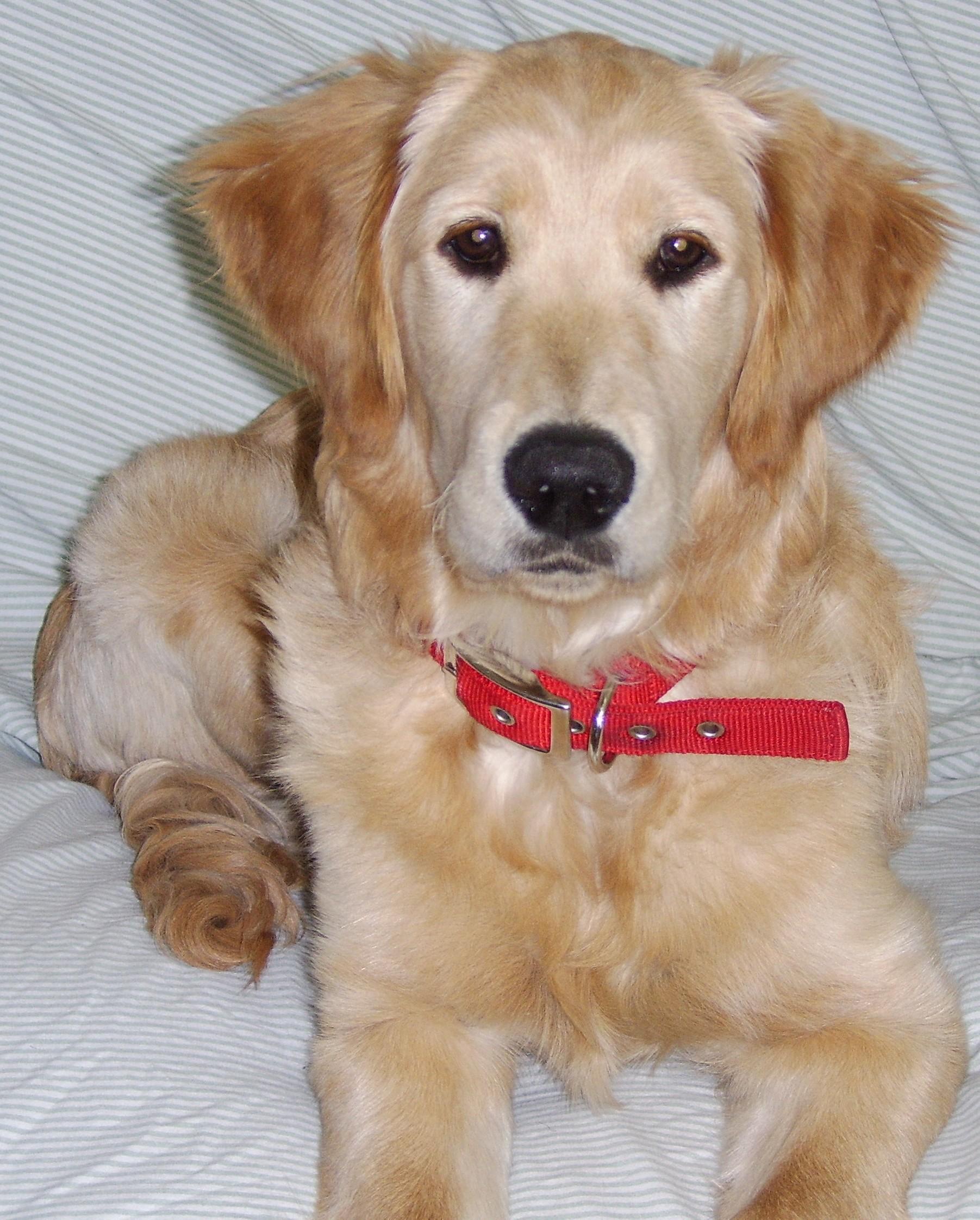 Puppy Love - Joy's Pics of Pup