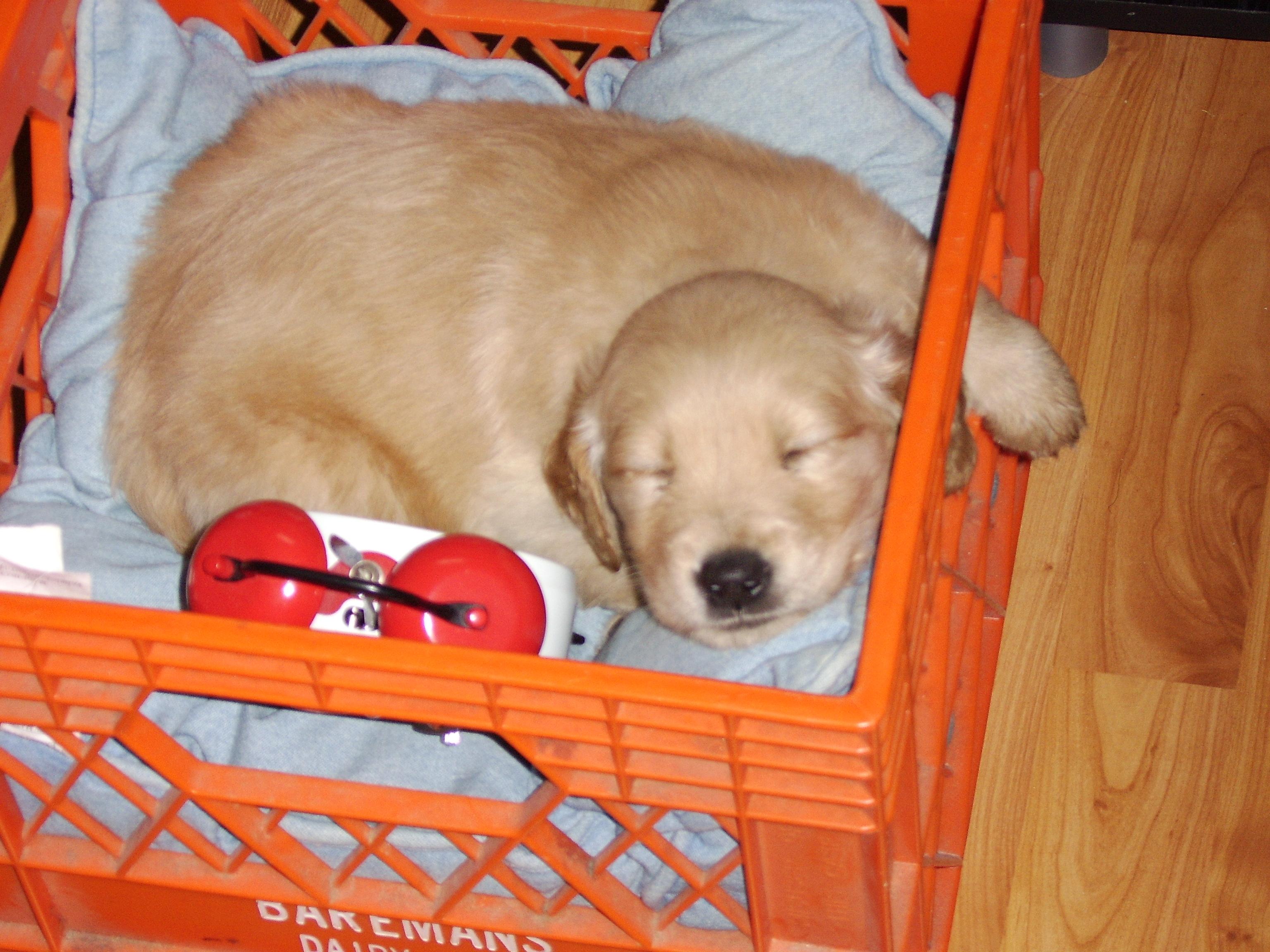 Babpy Pup Sleeping - Joy's Pic of Puppy