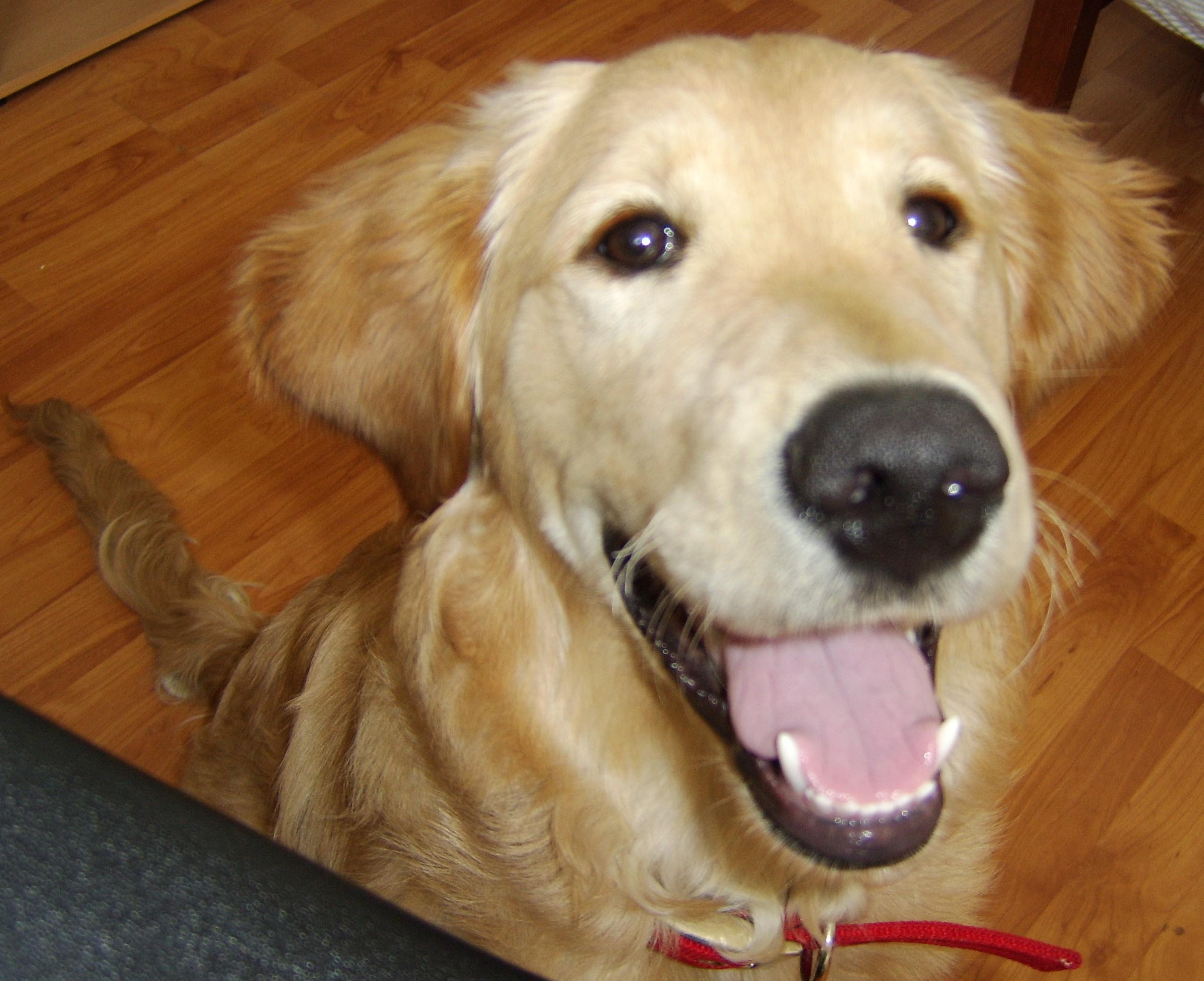 Laugh = Joy's Pics of Pup